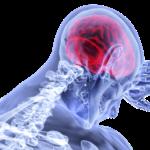 自律神経,脳