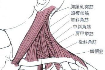 頚部筋肉側面